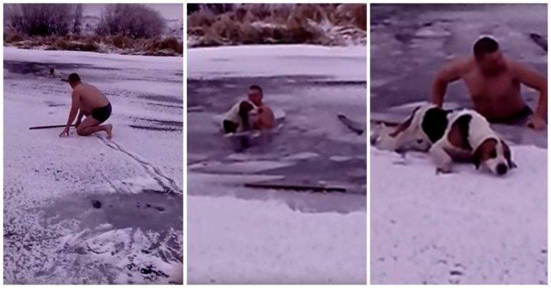 Мужчина спас собаку, которая оказалась подо льдом видео, животные, лед, россия, собака, спасение