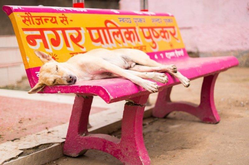 Фотографии уличных собак со всего мира город, домашние животные, животные, собака, эстетика, юмор