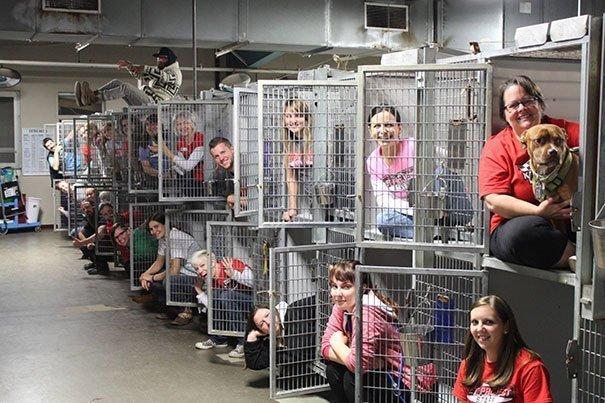Волонтёры делятся фотографиями из приютов волонтеры, животные, кошки, милашки, мимими, приютские животные, приюты, собаки