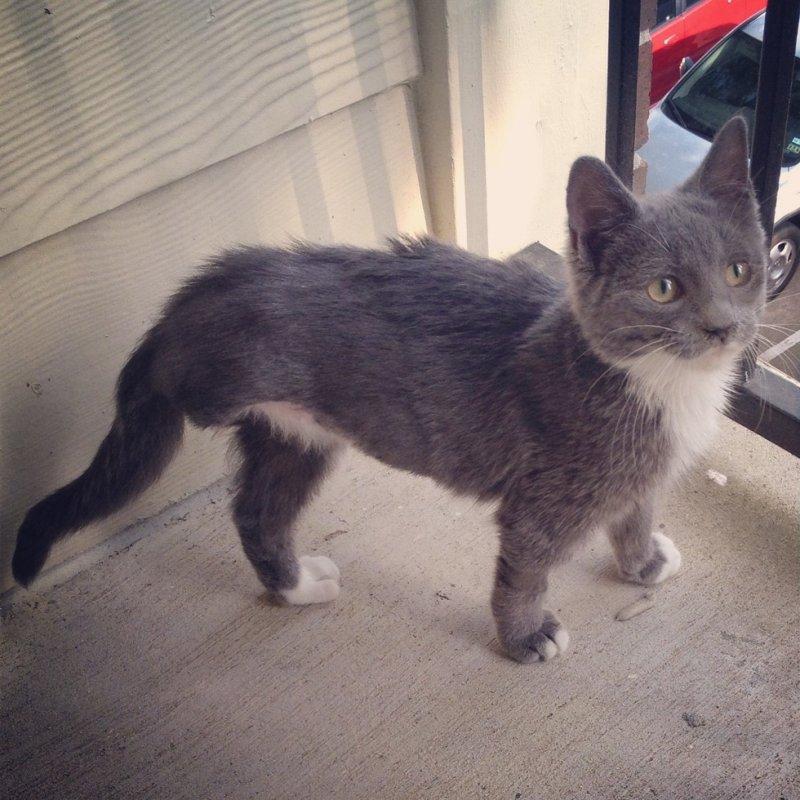 Я просто увидел его на улице, и принёс домой. животные, интересное, фото