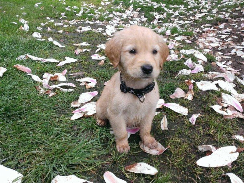 Это его первый день дома, и он ещё не освоился животные, интересное, фото