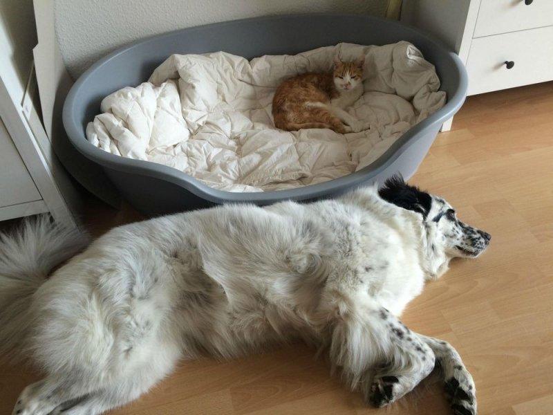 Собаки, которым пришлось уступить место кошкам кошки.фото, собаки