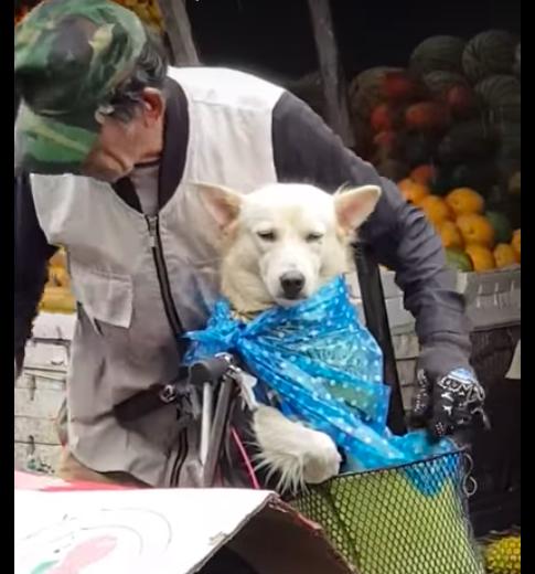 Пожилой мужчина трогательно заботится о собаке, чтобы она не промокла животные, забота, любовь, собака, человеческое отношение