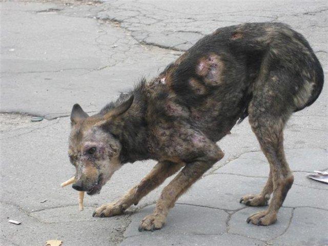 Уна Гейгер и ее муж увидели фотографию Самары, которая бродила по улицам Кишинева история, собака, спасение, фото