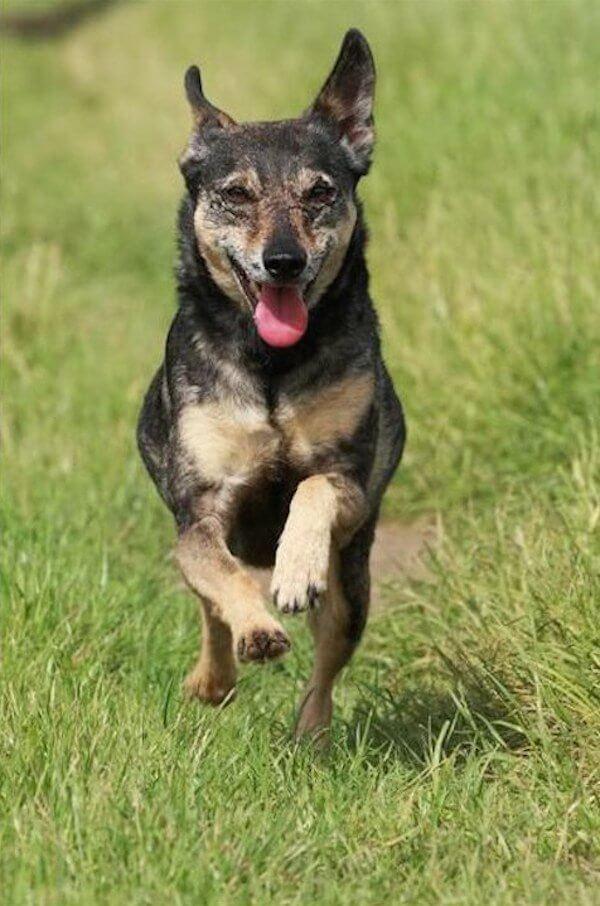 Но теперь с ней все в порядке и она счастлива в новой семье история, собака, спасение, фото