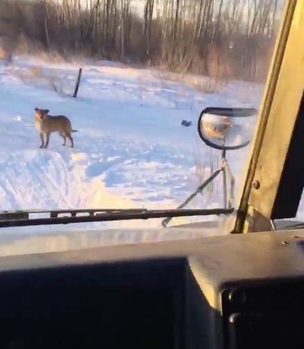 Водитель автобуса каждый день делает крюк, чтобы накормить бездомного пса добрые дела, животные, зоозащитники, история, собака, спасение