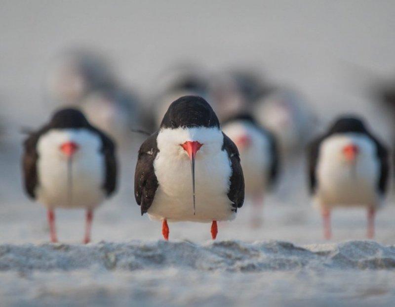 """""""Потому что мы- банда чёрных водорезов» comedy wildlife photography awards, животные, конкурс, мир, работа, смех, фотография, юмор"""