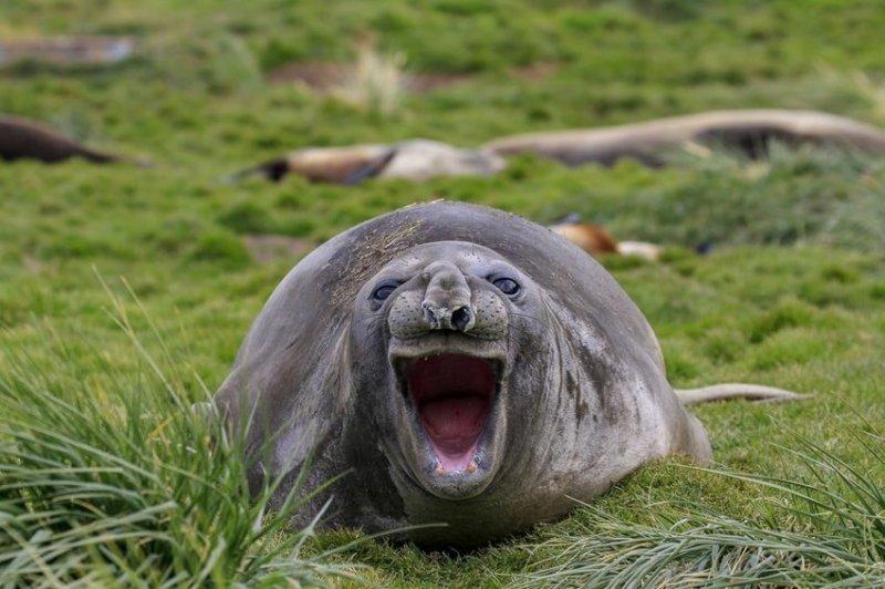 """""""Смех"""". Фотограф: Эми Кеннеди. comedy wildlife photography awards, животные, конкурс, мир, работа, смех, фотография, юмор"""