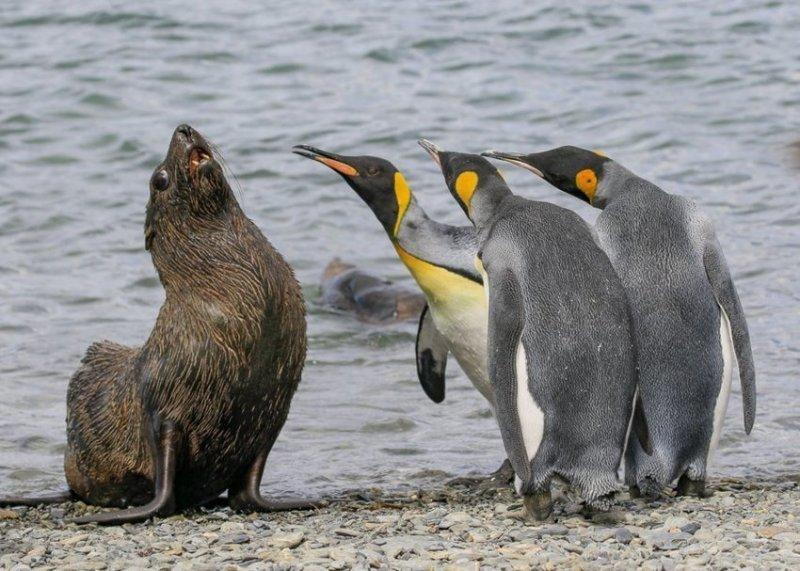 """""""Разборки начались"""", фотограф - Эми Кеннеди. comedy wildlife photography awards, животные, конкурс, мир, работа, смех, фотография, юмор"""