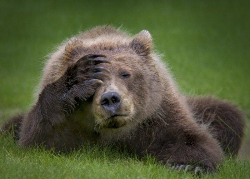 """""""Зачем же я вчера так много пил?"""" comedy wildlife photography awards, животные, конкурс, мир, работа, смех, фотография, юмор"""