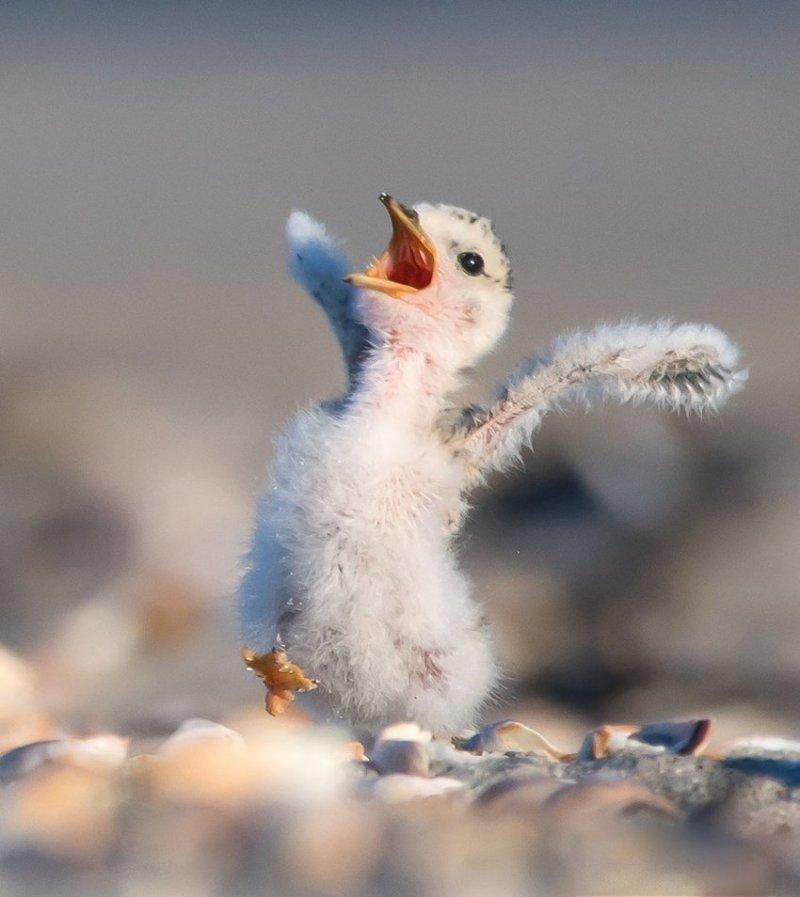 """""""Зевает птенец"""", фотограф Сара Девлин. comedy wildlife photography awards, животные, конкурс, мир, работа, смех, фотография, юмор"""