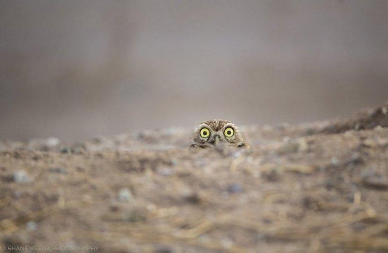 Страшно! comedy wildlife photography awards, животные, конкурс, мир, работа, смех, фотография, юмор