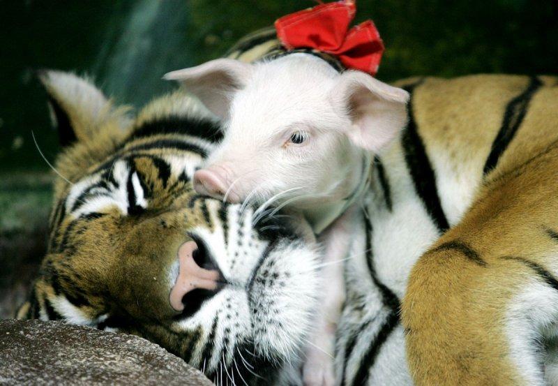 Если бы Дисней снимал новый фильм о животных, мы бы подкинули им это фото для идеи! дружба, животные