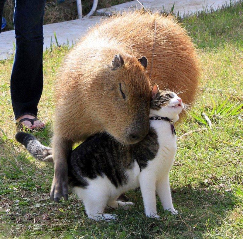 Похоже это любовь! дружба, животные