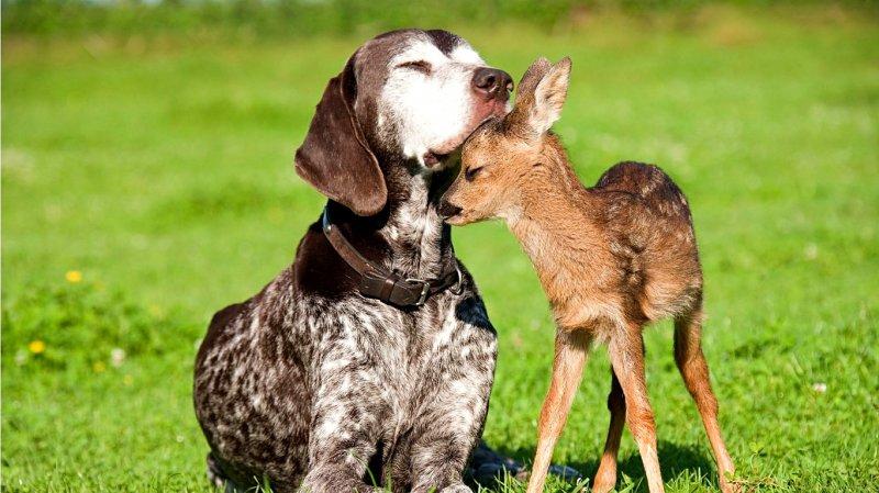 Звериный детский сад. дружба, животные