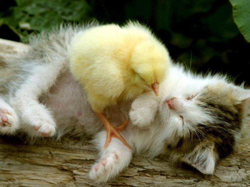 А это просто ми-ми-ми :) дружба, животные