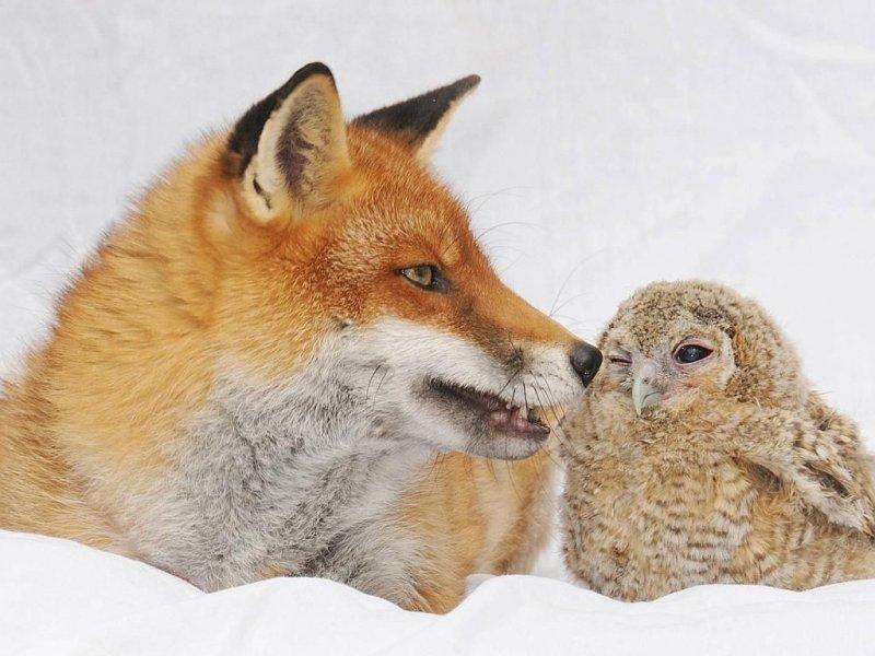 Хищник дружит со своим потеницальным ужином. дружба, животные