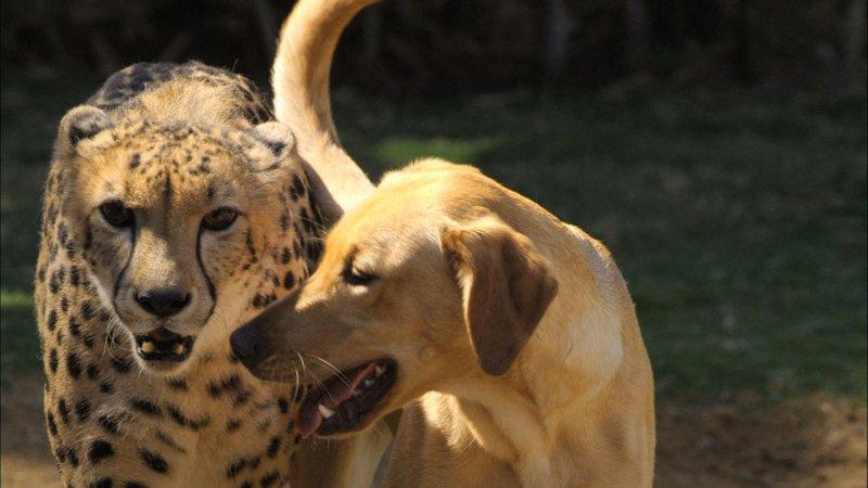 Золото высшей пробы. дружба, животные