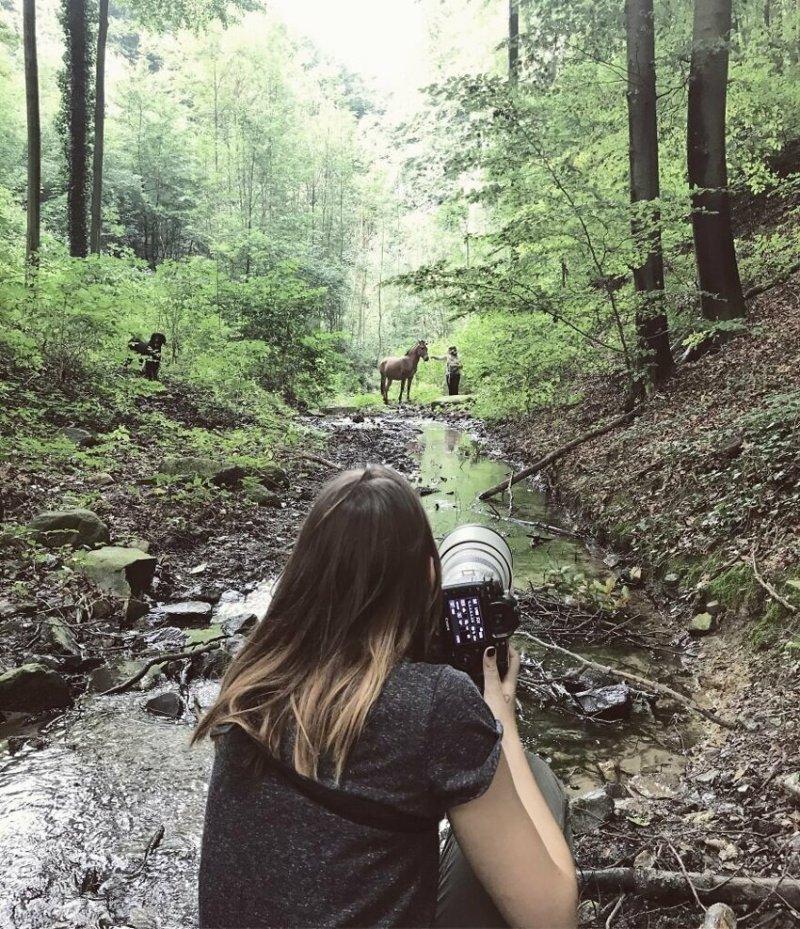 Зеброид Зури - гибрид зебры и лошади гибридные животные, гибриды животных, дикая природа, зебра, красота, лошадь, необычное животное, фотографии животных