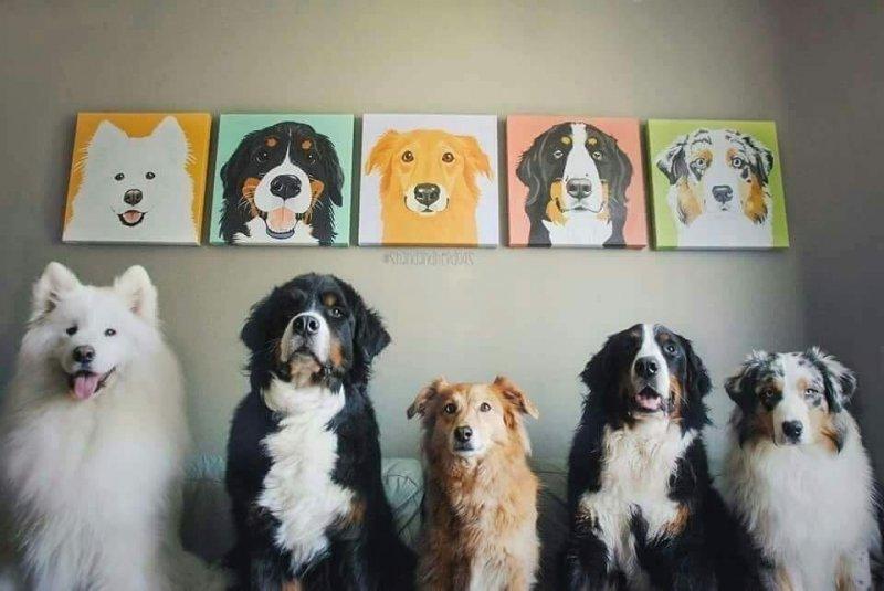 20 улыбательных фото, которые доказывают, что животные могут любить и дружить, как никто другой дружба, капибара, кошка, любовь, подборка, смешные животные, собака