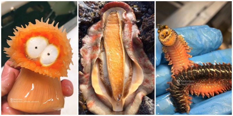 Морские монстры, которые попали в сети к самому необычному блогеру интересное, море, морские монстры, рыбы, фото