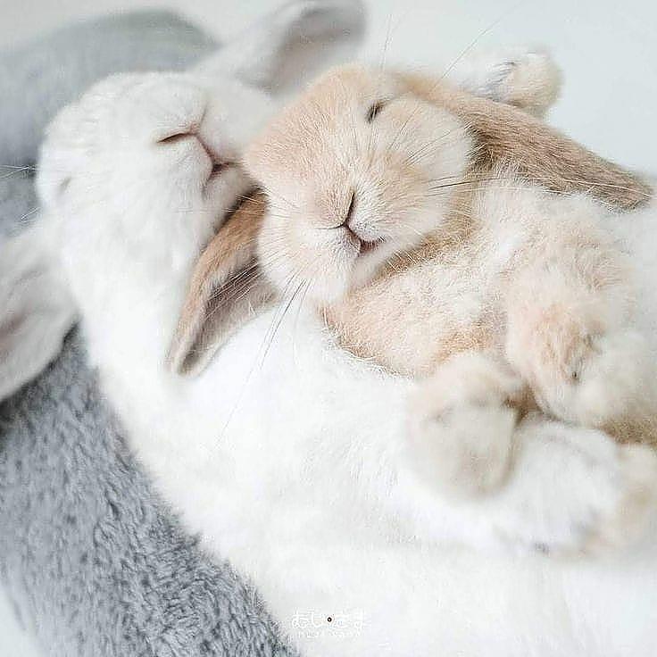 популярная спящий заяц фотки действительности, способны оценивать