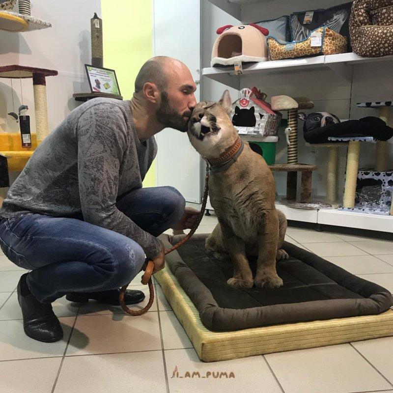 Пара из Пензы спасла пуму из контактного зоопарка