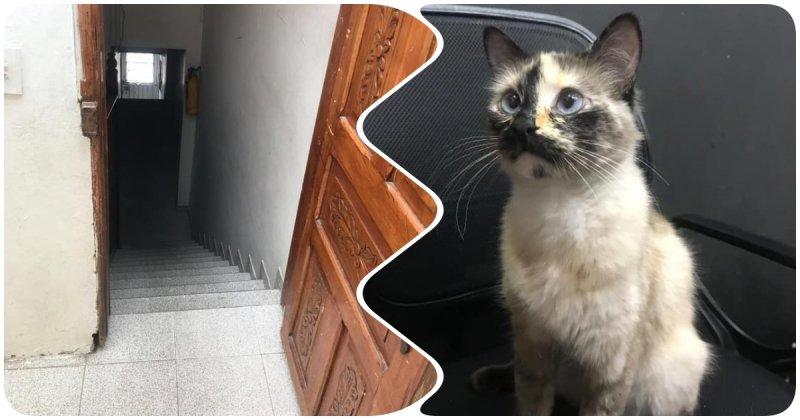 Кошка бросилась спасать малыша, который чуть не упал с лестницы