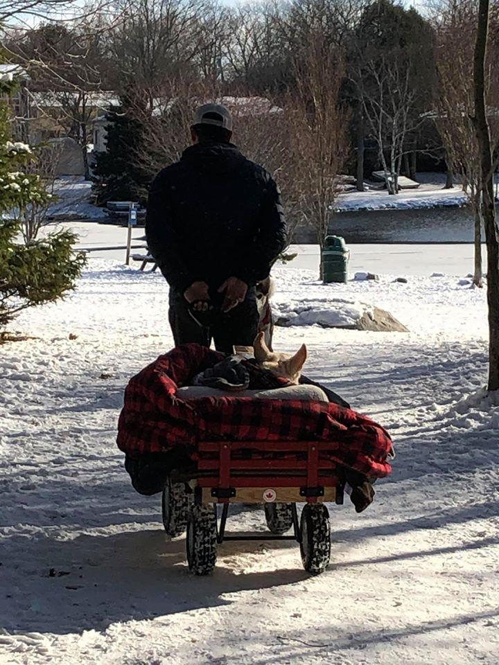 Мужчина смастерил парализованной собаке тележку для прогулок