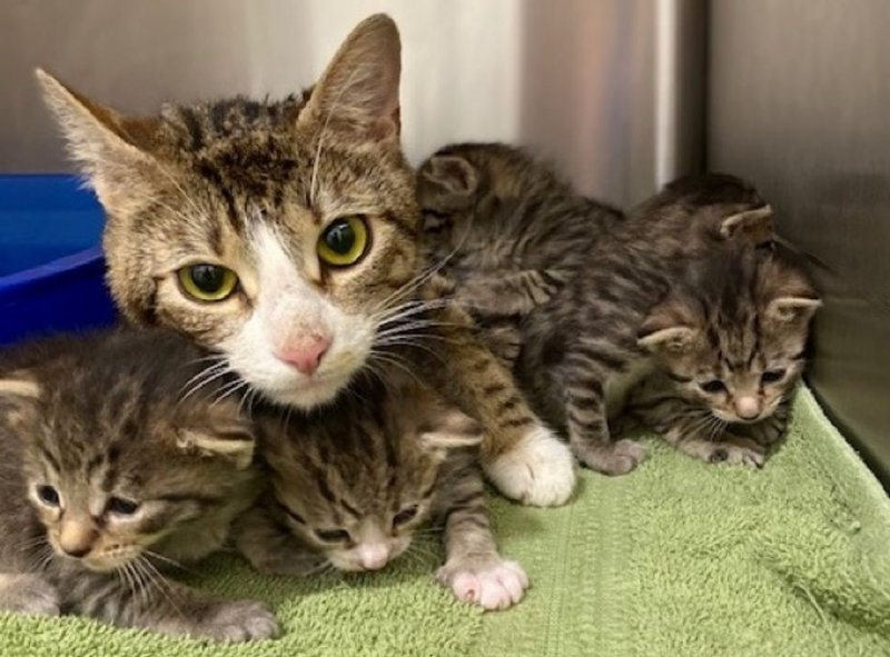 Отчаянная мать-кошка не знала, как согреть своих крохотных малышей в холода