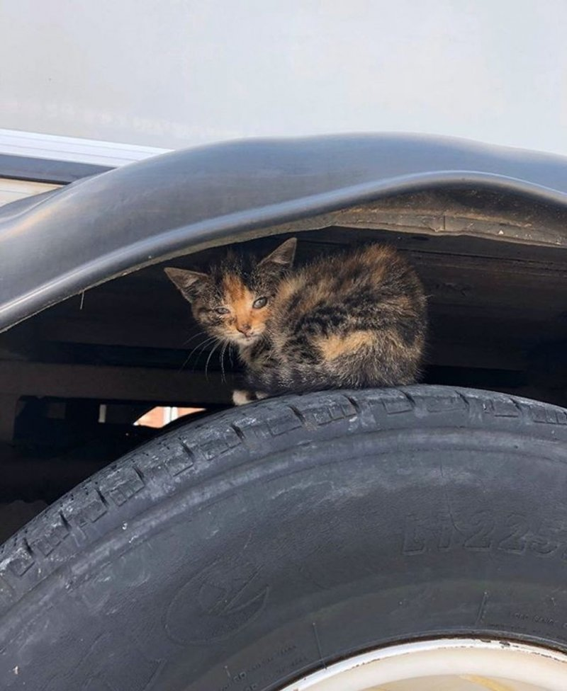 A modest kitten was crying plaintively, hiding from people under the bus