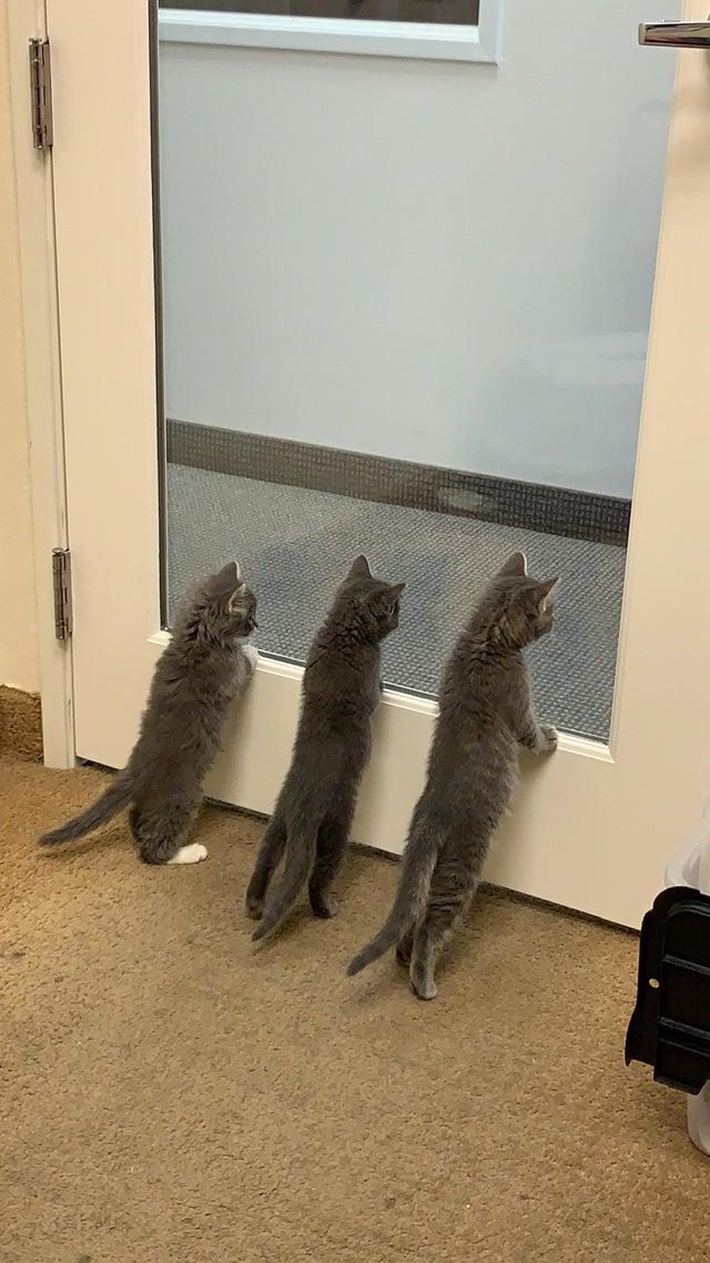 20 очаровательных фото крошечных котят, чтобы поднять настроение