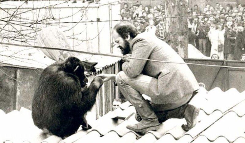 История шимпанзе, который 2 раза сбегал из Белградского зоопарка