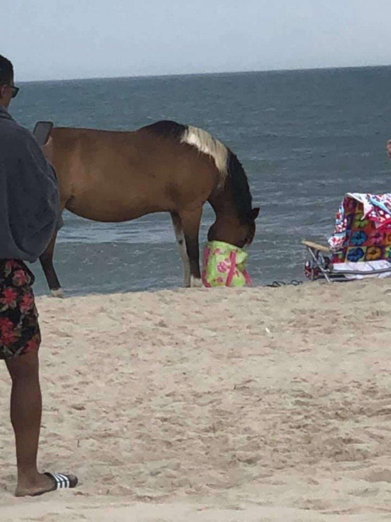 Банда лошадей ворует вещи посетителей пляжа